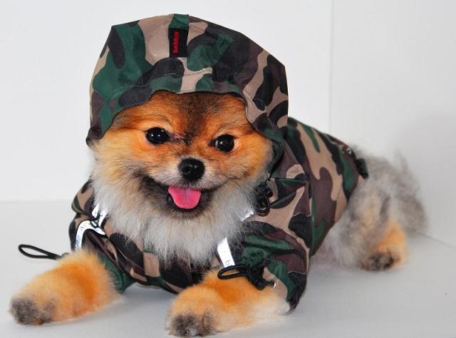 собаки в одежде картинки