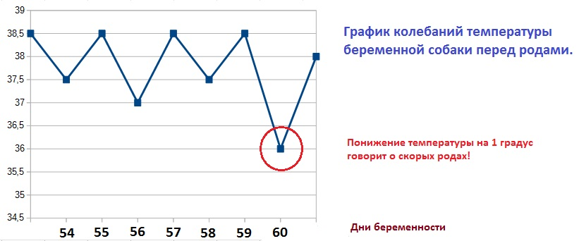 Нормальная температура тела для беременных 59