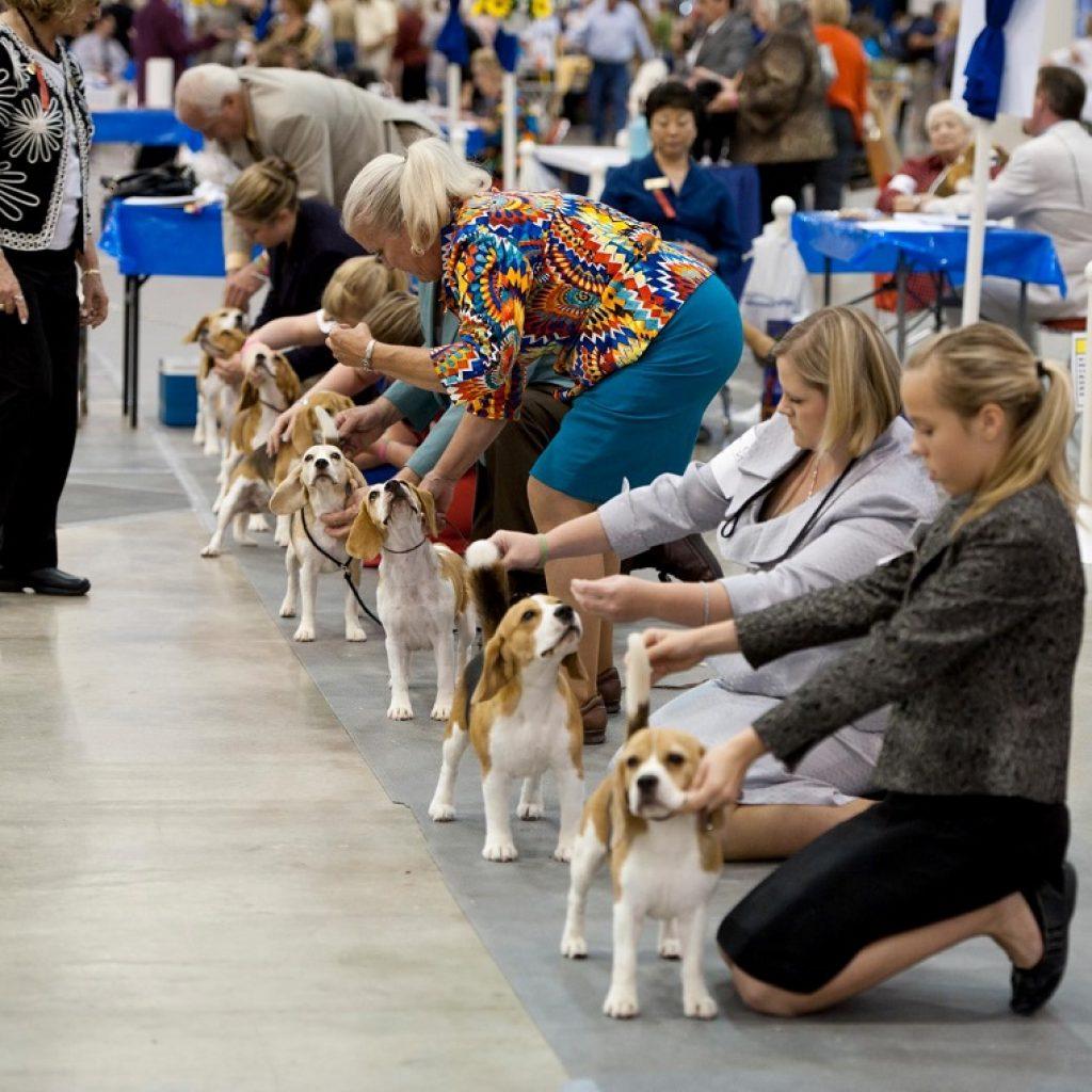 Выставка собак под Курском соберет участников из Германии и Эстонии