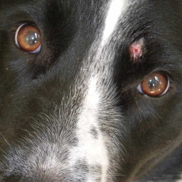 лишай у собаки фото начальная стадия фото